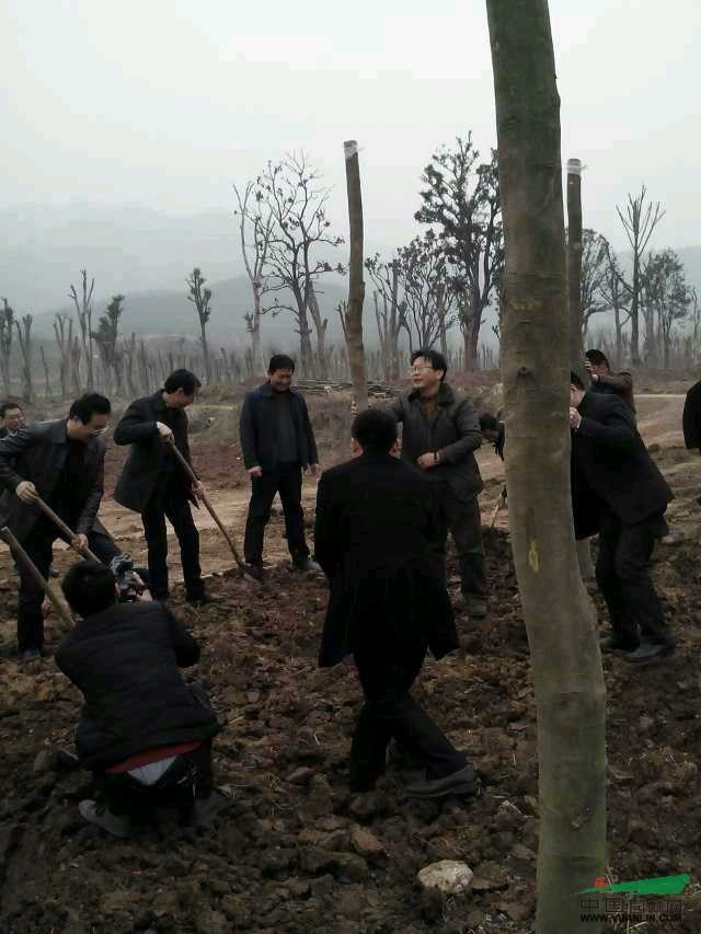 2014年3月12日植树节,南漳县王鹏县长等县领导支持緑色生态企业发展,在我们合作社基地视察指导植树